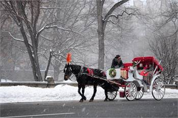 Central Park Carriages